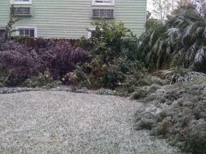 Snow in the backyard!